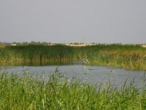 Земельный участок I-12745, Хотяновка - Фото 7