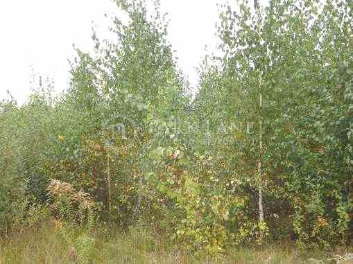 Land Kozyn (Koncha-Zaspa), M-11039 - Photo 4