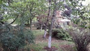 Земельный участок I-27055, Старокиевская, Козин (Конча-Заспа) - Фото 4