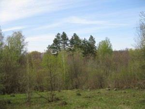 Земельный участок R-21114, Полевая, Крушинка - Фото 3