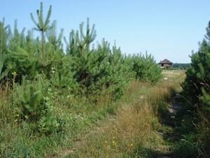 Земельный участок I-18534, Бобрица (Киево-Святошинский) - Фото 5