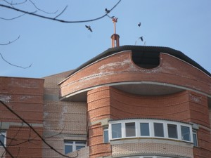 Нежилое помещение, Z-1124919, Жукова Маршала, Киев - Фото 7