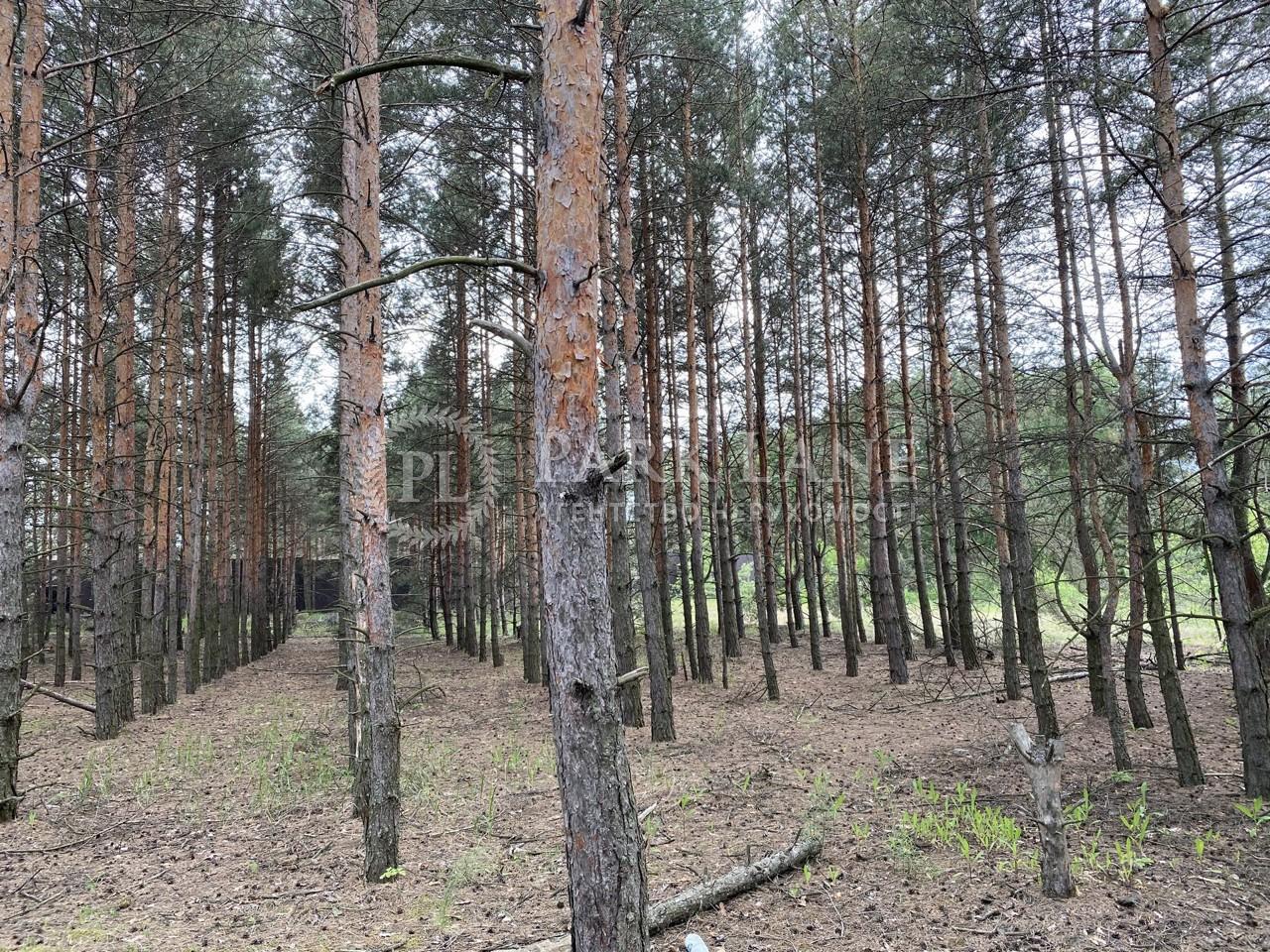 Земельный участок Плюты (Конча-Заспа), I-33560 - Фото 5