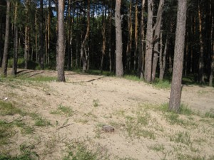 Земельный участок I-24497, Украинка - Фото 9